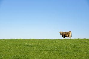 Avec Engagé RSE, la filière bétail et viande la joue durable